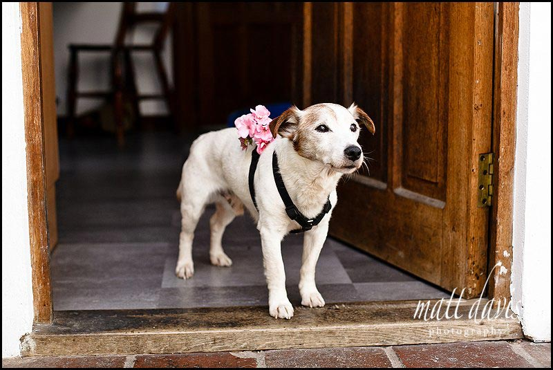 Dog at wedding with flower