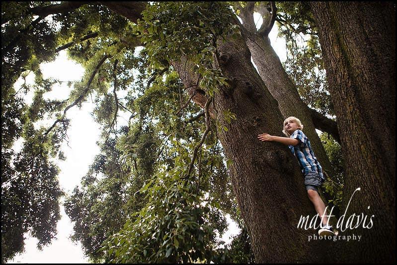 Child climbing tree at Pittville pump room