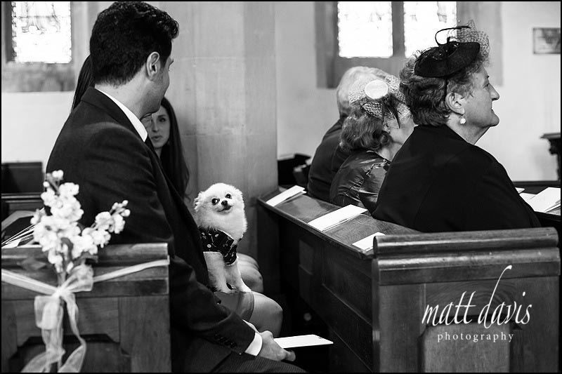 Black and white wedding photos of dog in church Gloucestershire