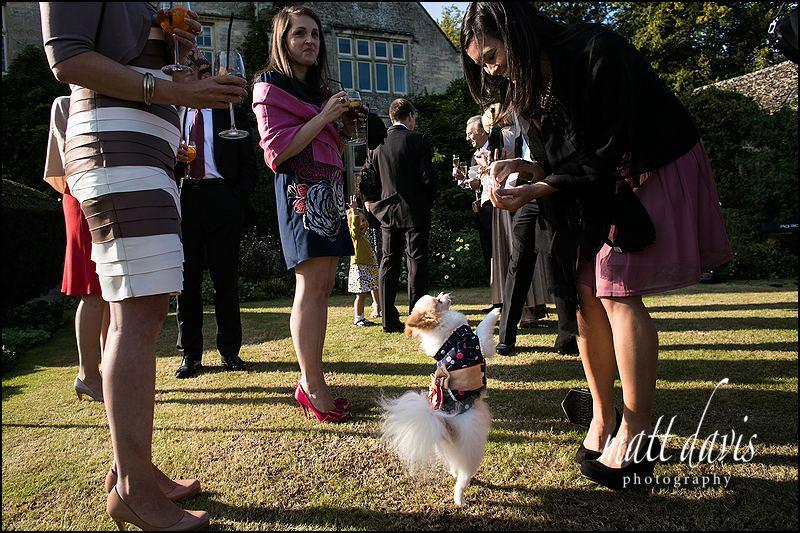 A dog at a wedding at Barnsley House